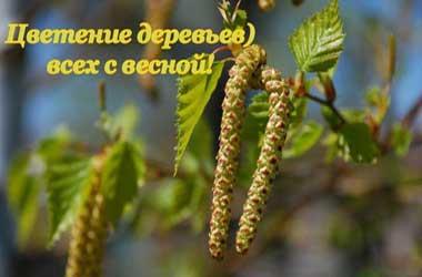 Цветение, аллергия на пыльцу, перекрестная пищевая аллергия.