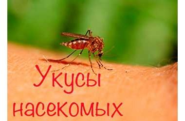 Укусы насекомых. Насколько опасно при аллергии?